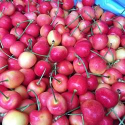 CMI Washington Rainier Cherry