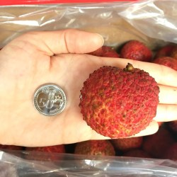 Seedless Lychee size comparison