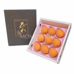 japanese-tanaka-biwa-gift-box-500g