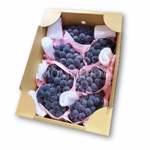 Nagano Kyoho Grapes 5kg Box