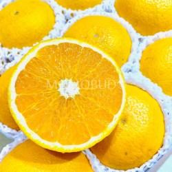 Japanese Kiyomi Orange cross section