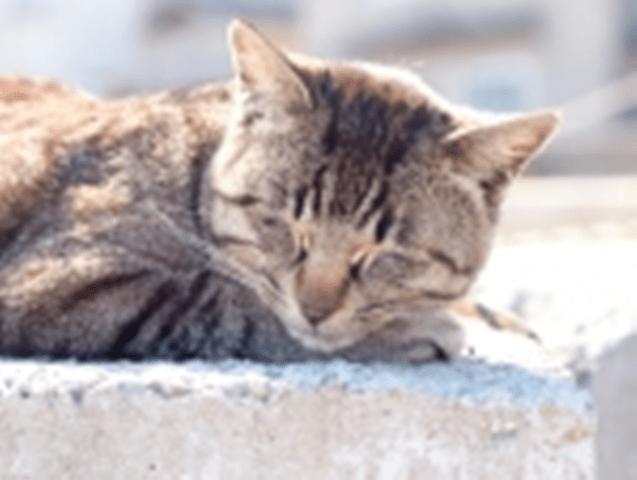 cat3B