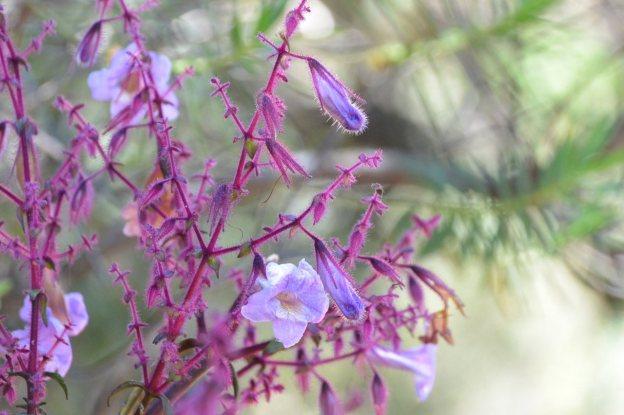 ホートンプレインズ国立公園の花
