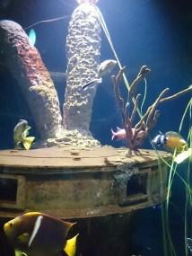 オレゴンコースト水族館-12-28-37