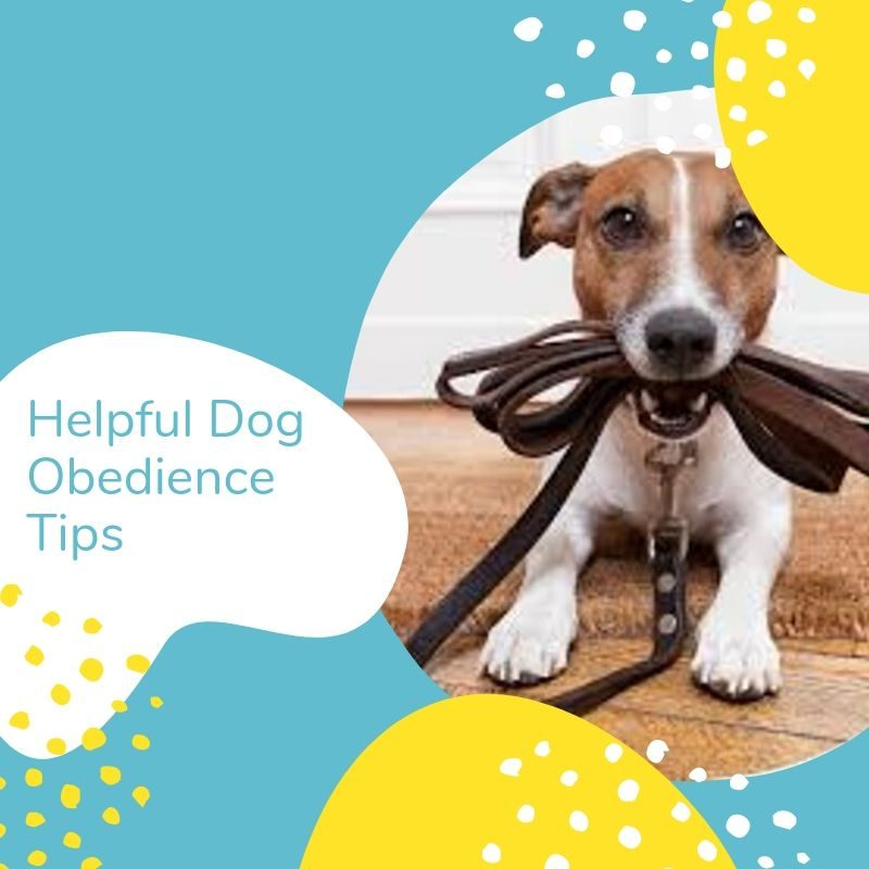 Helpful Dog Obedience Training Tips for Pet Parents | Mom