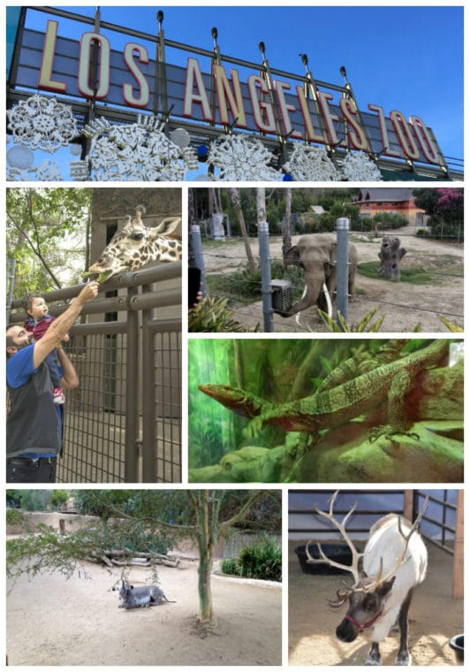 The Los Angeles Zoo Family Guide