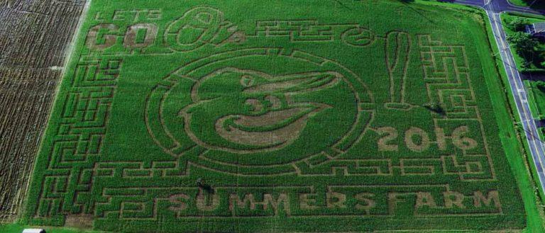 summers-farm-maze