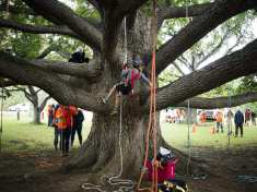 free-maryland-events-climb-a-tree-national-arboretum-ontario-tree-climbing-championship