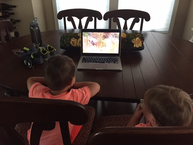 Latest post breakfast activity: Rhino videos on YouTube! The San Diego Zoo has a great series of videos online for kids...