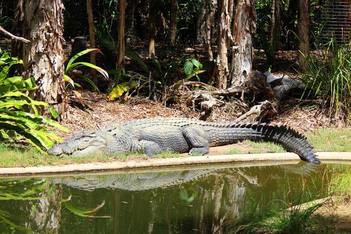 Hartley S Crocodile Adventures Mom Vs The Boys