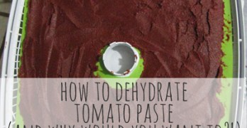 How to Dehydrate Tomato Paste – and why would you even want to?