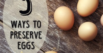 5+ Ways to Preserve Eggs for Food Storage