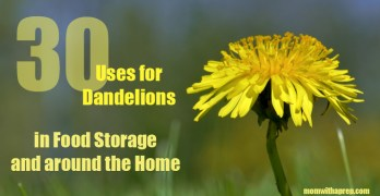 30+ Ways to Use Dandelions in Food Storage and Around the Home