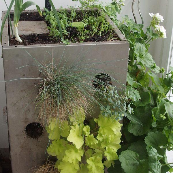 Défi balcon-jardin en avril
