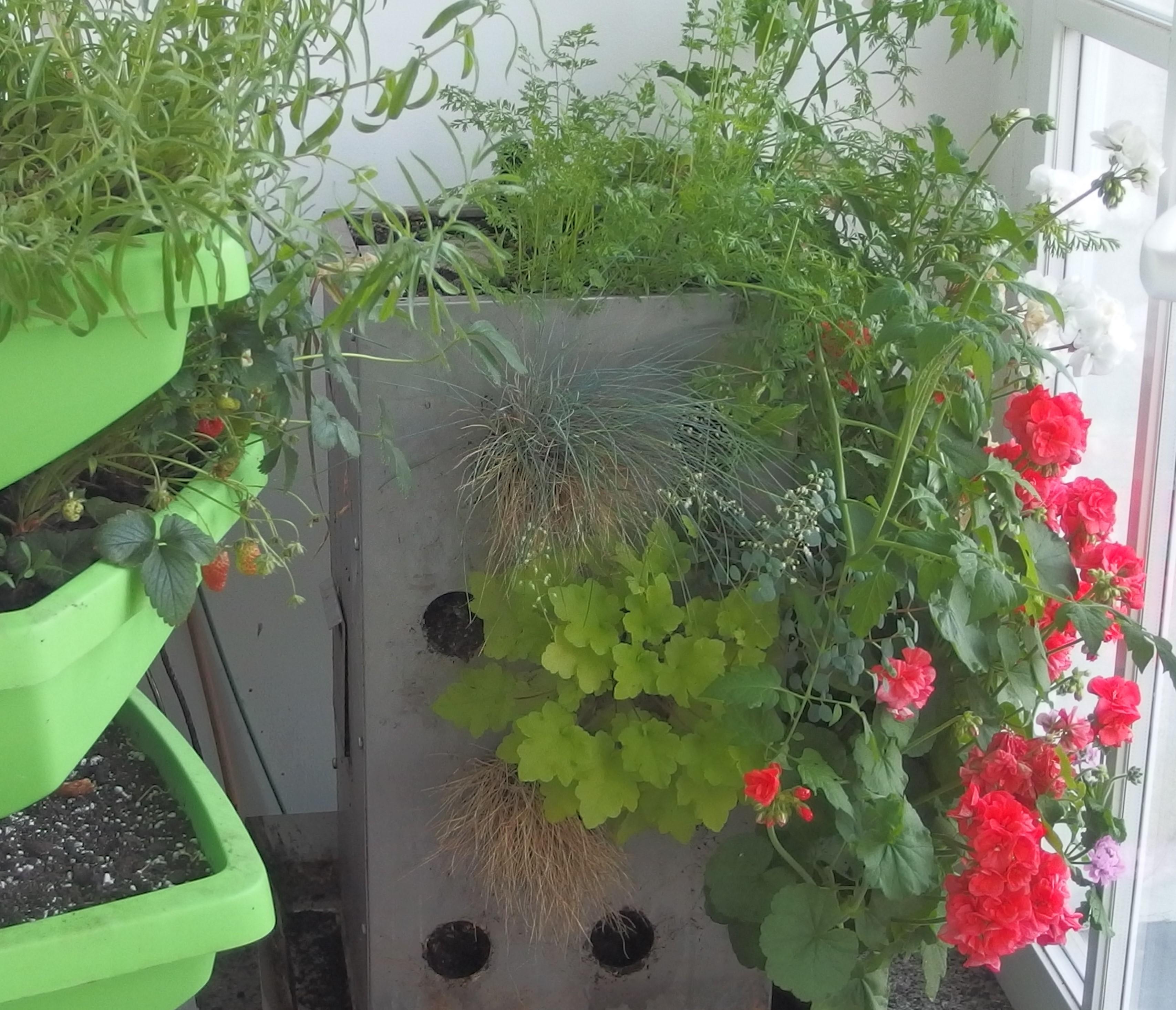 Défi balcon-jardin en mai