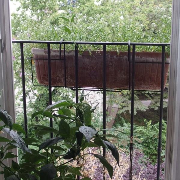 Défi balcon-jardin en septembre