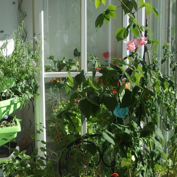 Préparer son balcon-jardin à la canicule