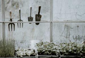 Une véranda est idéale pour hiverner vos plantes