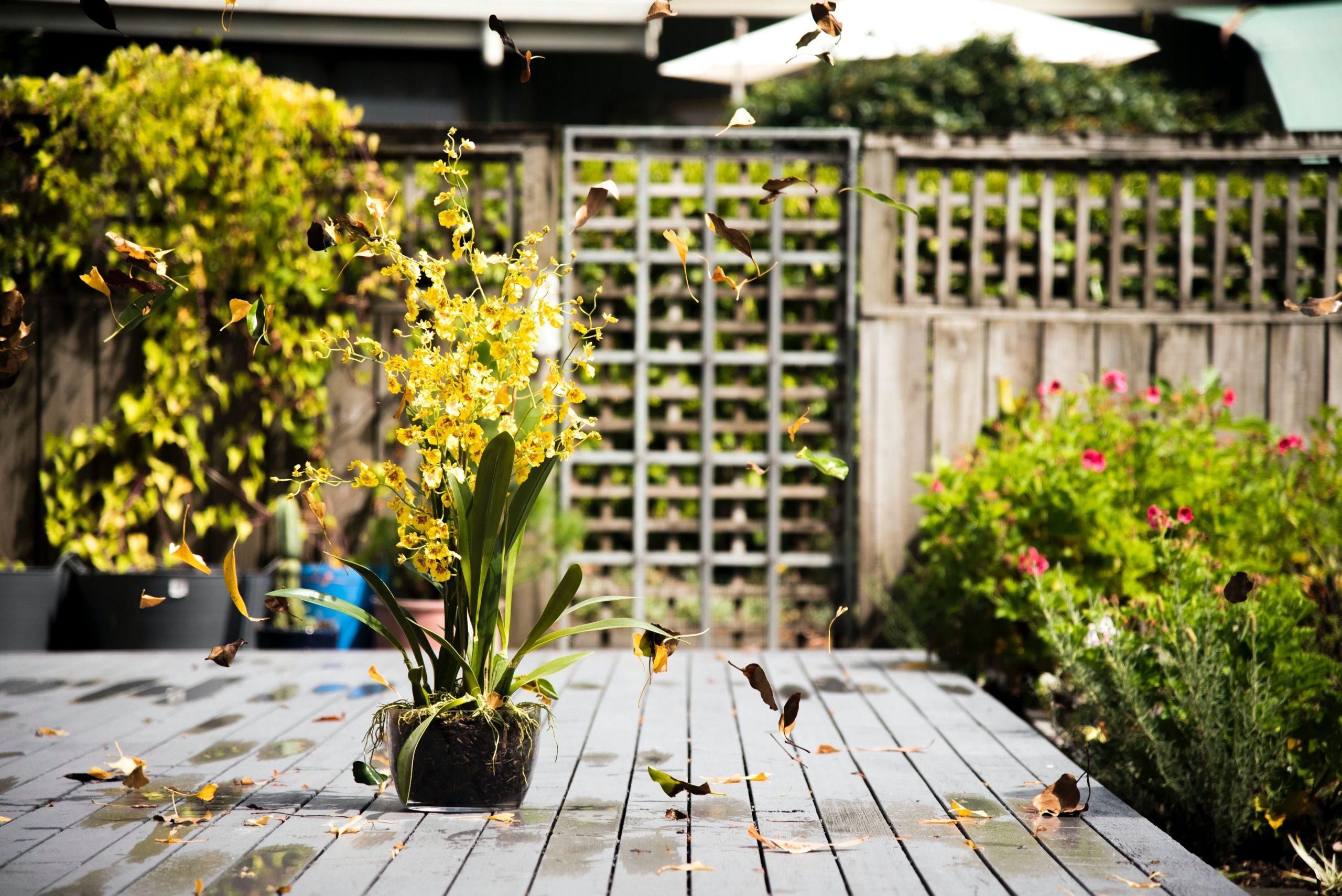 Créer son espace-jardin : 3 étapes de réflexion