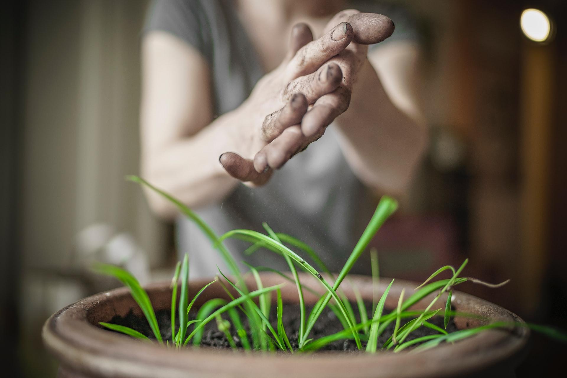 Débuter en jardinage sur votre balcon : article invité