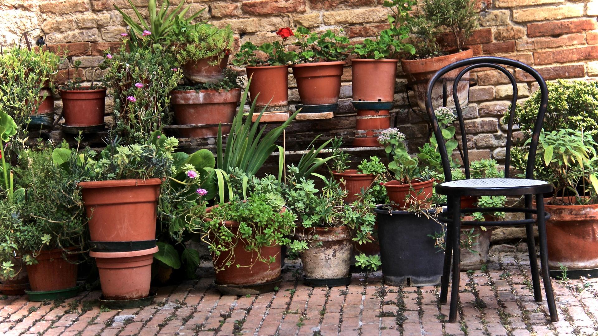 Jardiner en pot : 7 bonnes raisons (au moins)