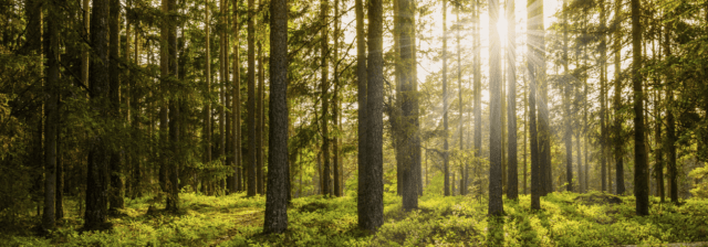 foret eco responsable