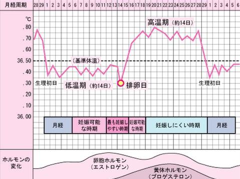 基礎体温表