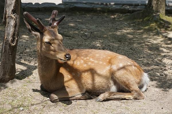 鹿との戯れ