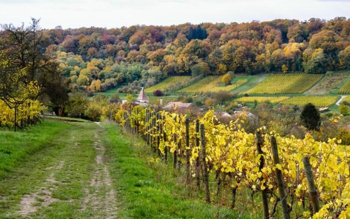 Côtes de Toul © Robert Jeantrelle