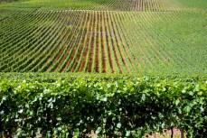 Les vignes du Rangen à Thann © French Moments