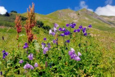 Fleurs alpines © French Moments