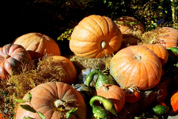 Courges d'automne © French Moments