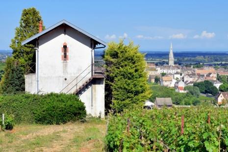Vignoble de Meursault © French Moments