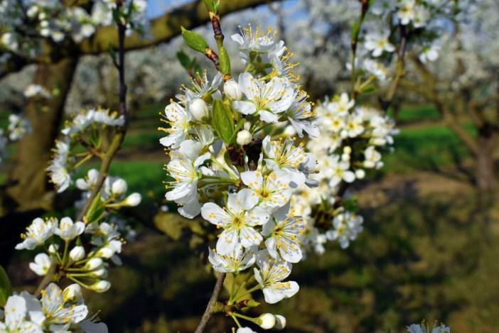Photos de printemps en Lorraine - Bruley © French Moments