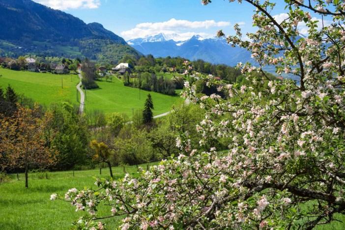 Pommiers en fleurs près du hameau de Ponnay © French Moments