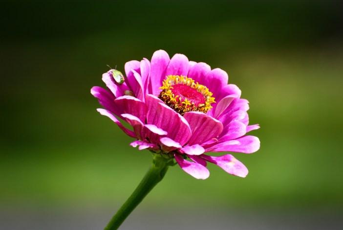 Fleur au parc de l'Impérial © French Moments