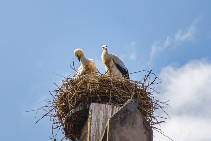 Un nid de cigognes dans le village © Valentin R. - licence [CC0] from Wikimedia Commons