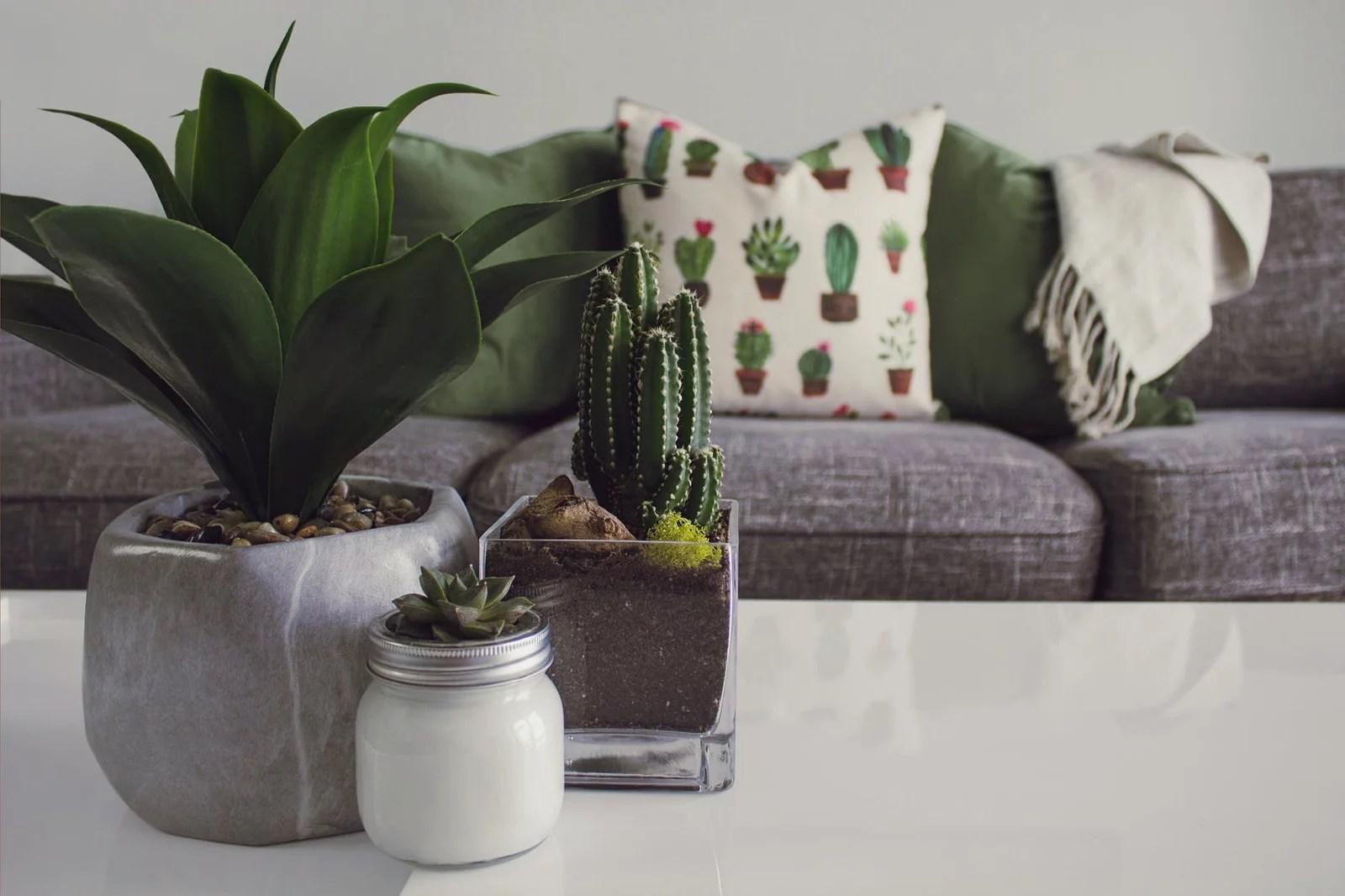 plantes sur la table