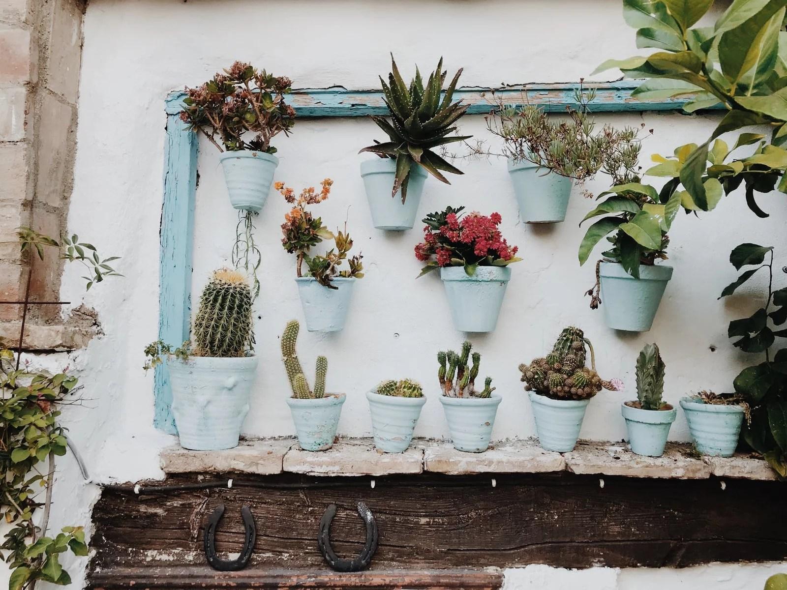 plantes en pot sur mur