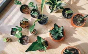 Différente variété de plantes à feuilles vertes