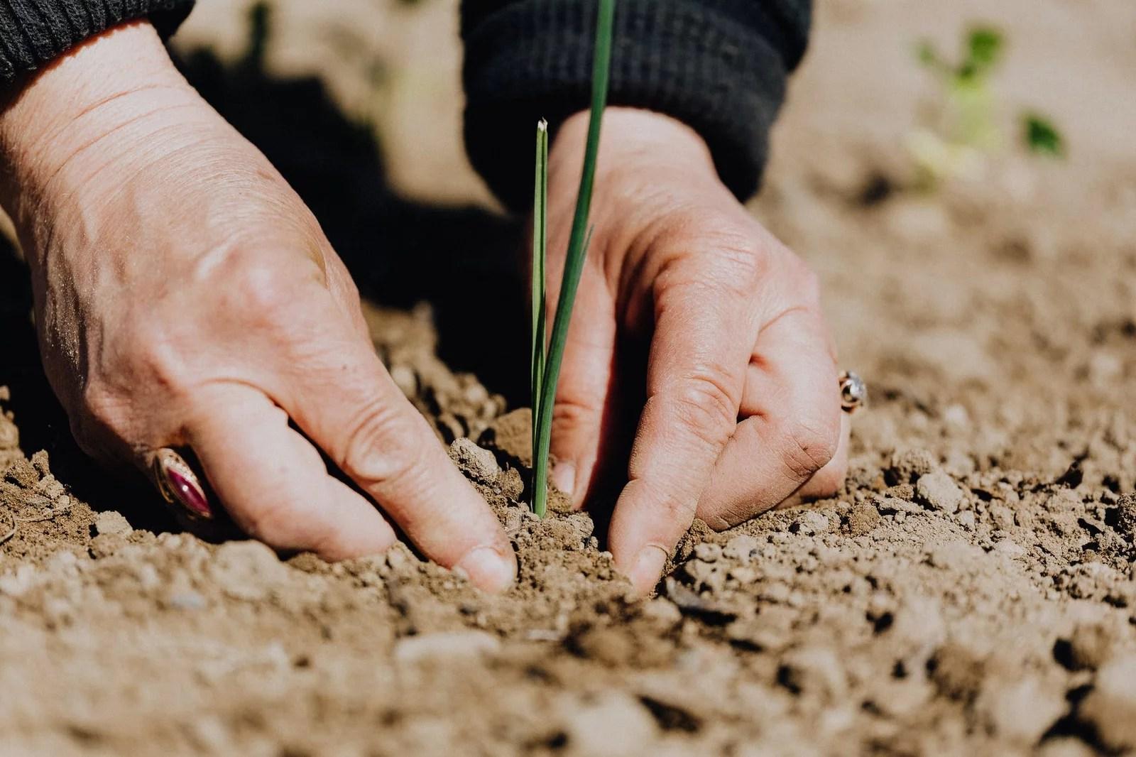 Travailler la terre du jardin