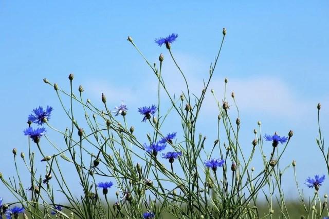 Décorer mon jardin avec des fleurs bleu