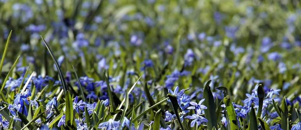 Inspiration pour un jardin tout en bleu