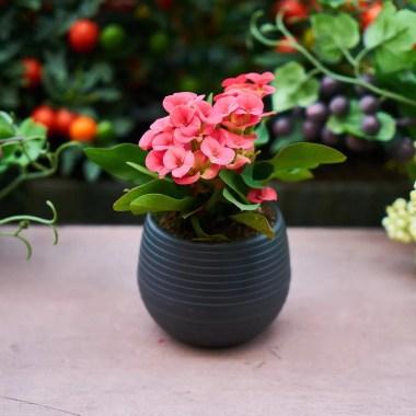 Offrez des plantes pour Noël