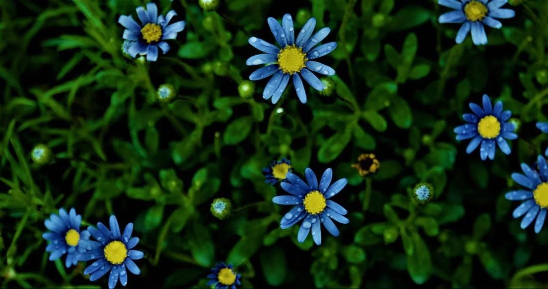 S'occuper du jardin en mai