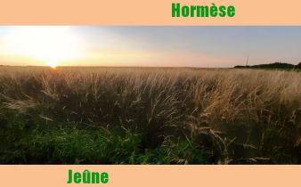 Utilisation de la loi de l'hormèse pour faire du jeûne sec intermittent