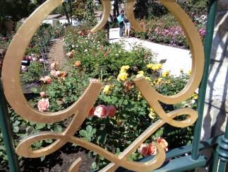 La rosa e le sue moltissime varietà pregiate, protagonista della Roseraie Princesse Grace a Monaco