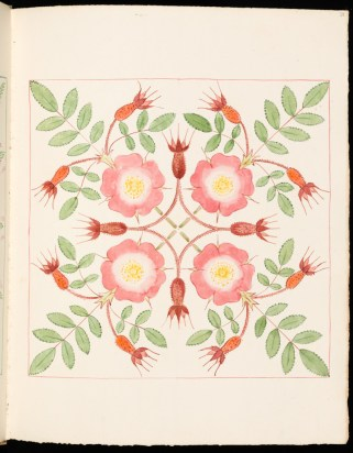 Clarence Bicknell è autore di raffinate illustrazioni floreali realizzate nei suoi album