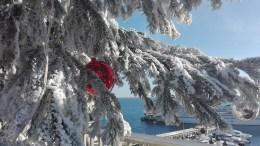 Illuminazioni natalizie, coreografie sontuose e i tradizionali abeti saranno protagonisti del Natale 2017 a Monte Carlo