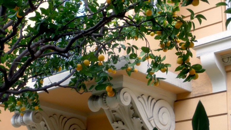 Arance in Rue Grimaldi a Monaco